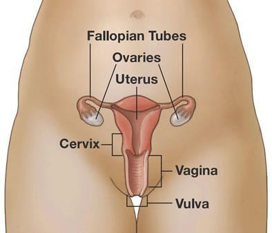 Descubriendo nuestro útero