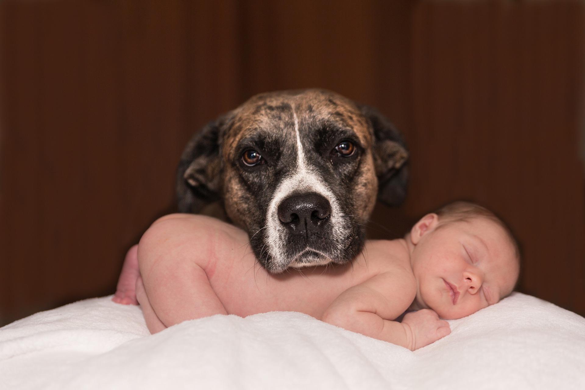Se adaptará mi perro a la llegada del bebé?